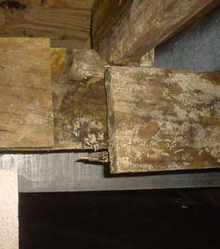 Extensive basement rot found in Mishawaka by Nova Basement Systems